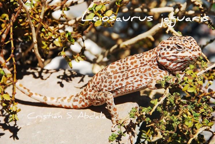Leiosaurus jaguaris