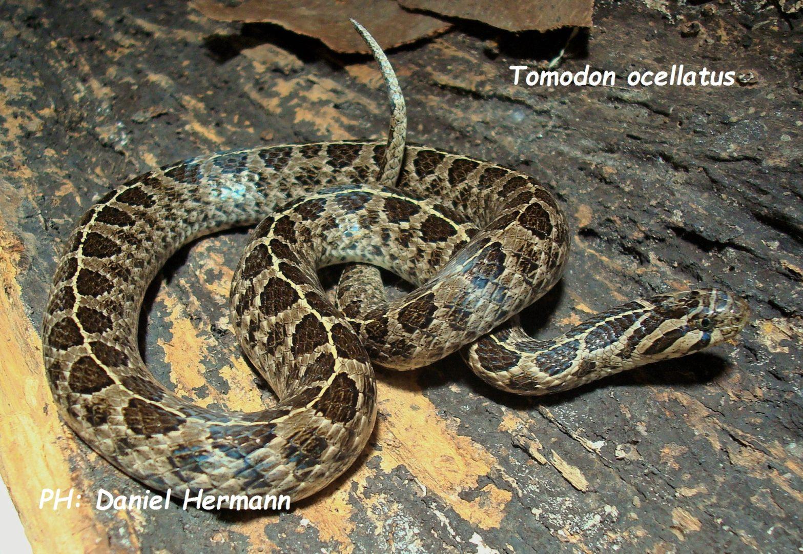 Serpientes de Argentina
